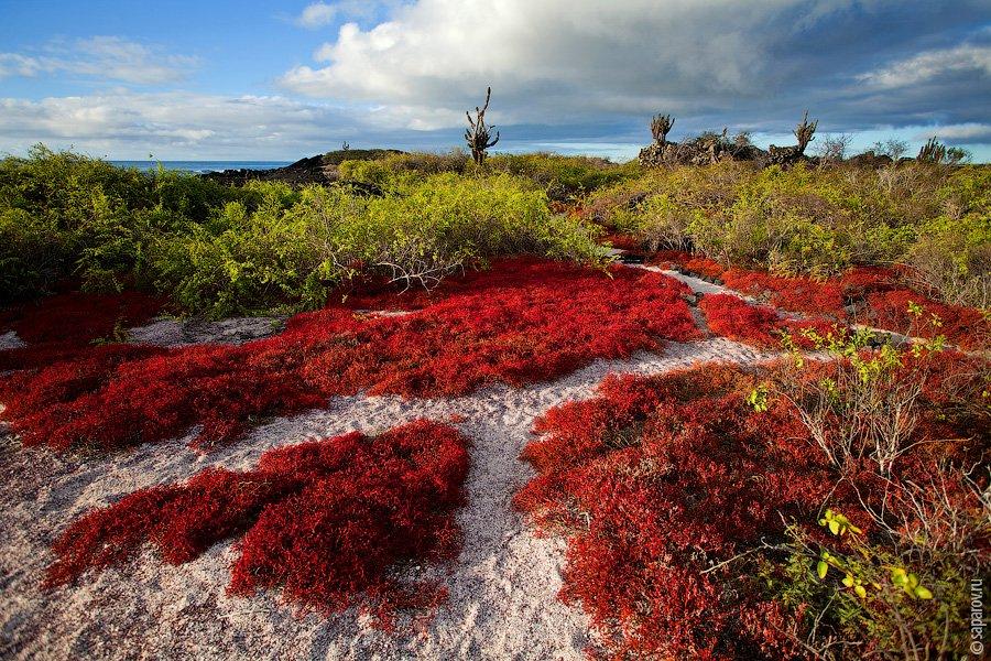 Галапагосские острова8