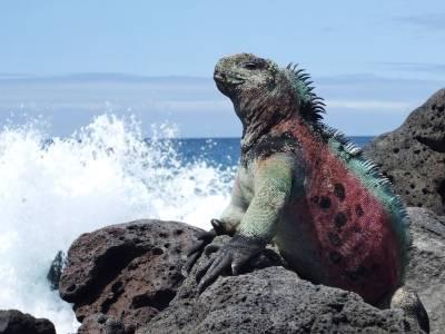 Животное галапагосских островов