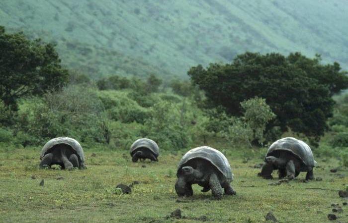 Животные Галапагосских островов